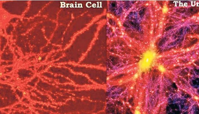 Neural Network Of Human Brain  Has Similarities to Millennium Simulation Of Cosmic Web