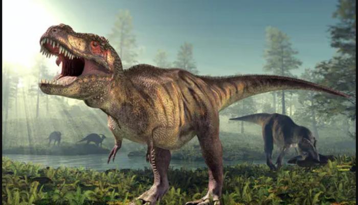 Fossils illuminate dinosaur Tyrannosaurus rex evolution in eastern North America